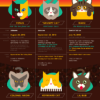 internet's obsession with cats - infographic