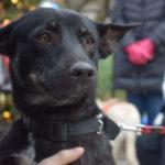 December Dog Adoption Event: Carl Schurz Park