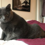 girthie gertie fat cat