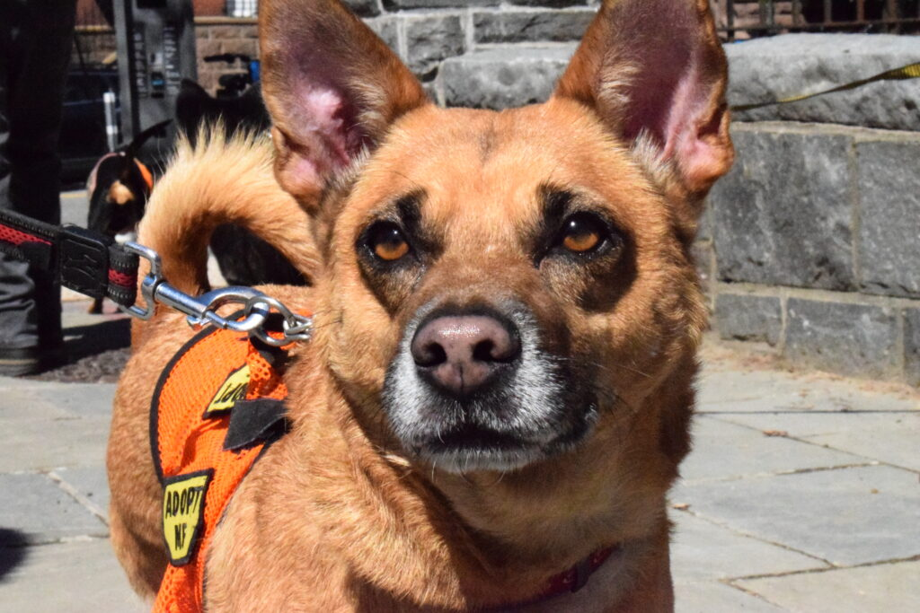 Welcoming Spring with Dogs and Cats at Carl Schurz Park
