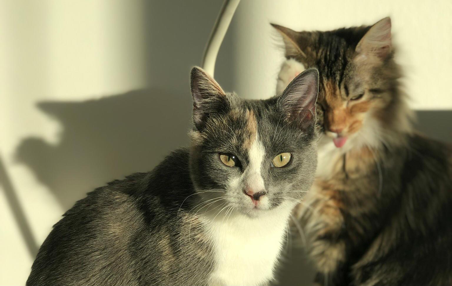 Help kitties travel to India