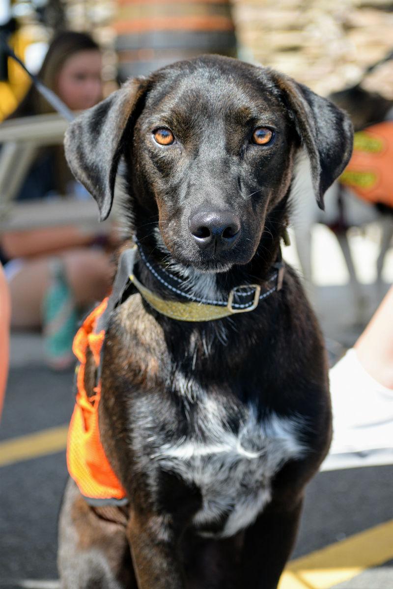 Adoptable Dog Baku