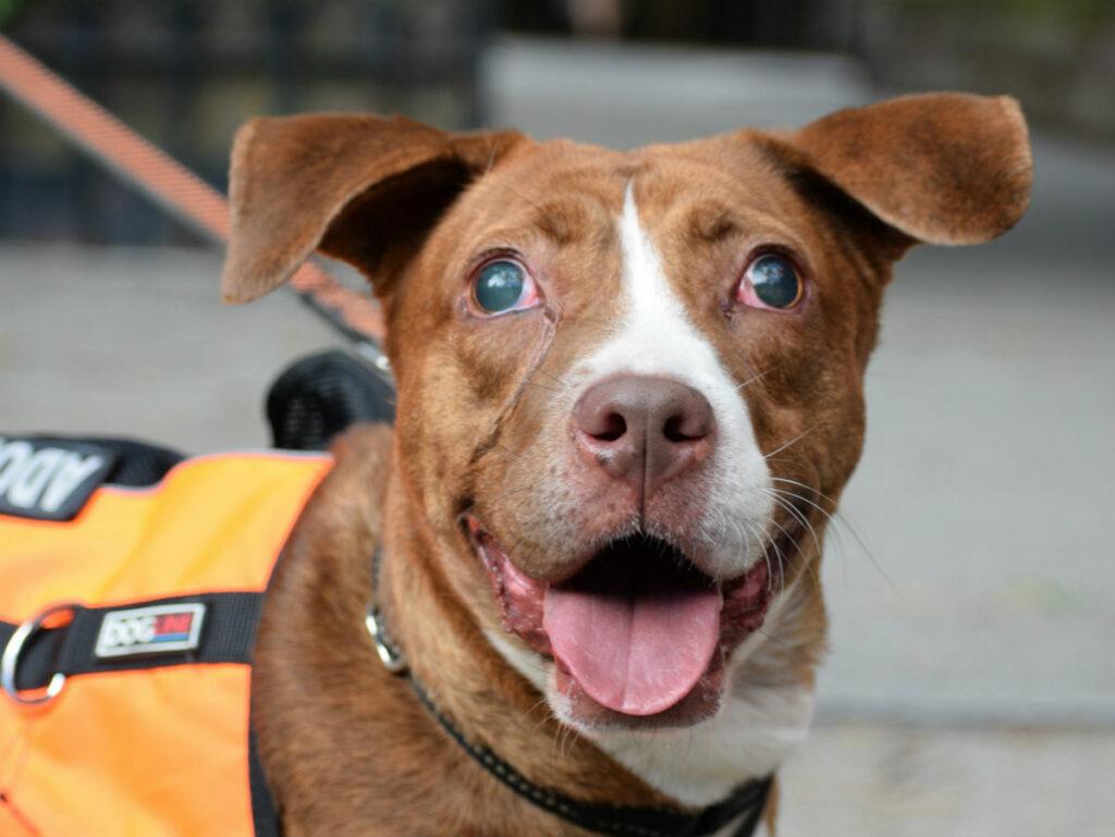 Dog Adoption Event At Carl Schurz Park, NYC