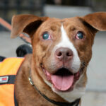Dog Adoption Event At Carl Schurz Park, NYC