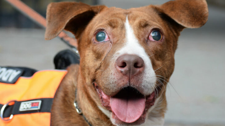Mac - Adoptable blind dog in NYC