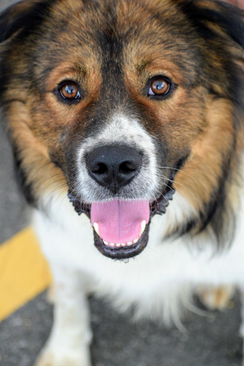 Adoptable dog Rudy