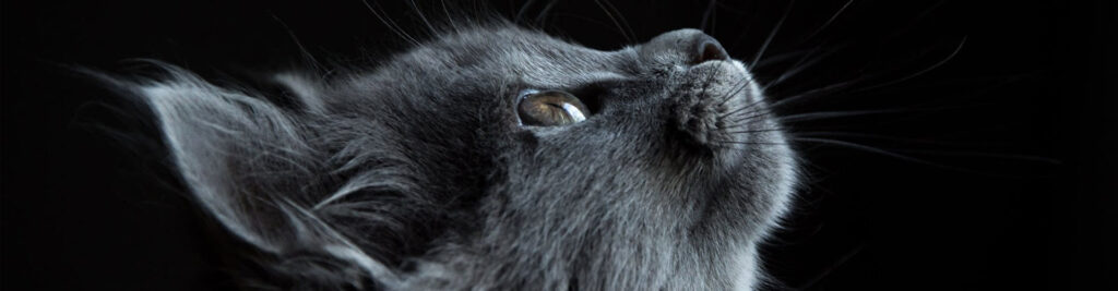Zani's Furry Friends ZFF, Inc Cat & Dog Adoption in NYC